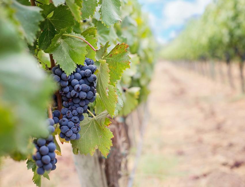 prince edward county winery