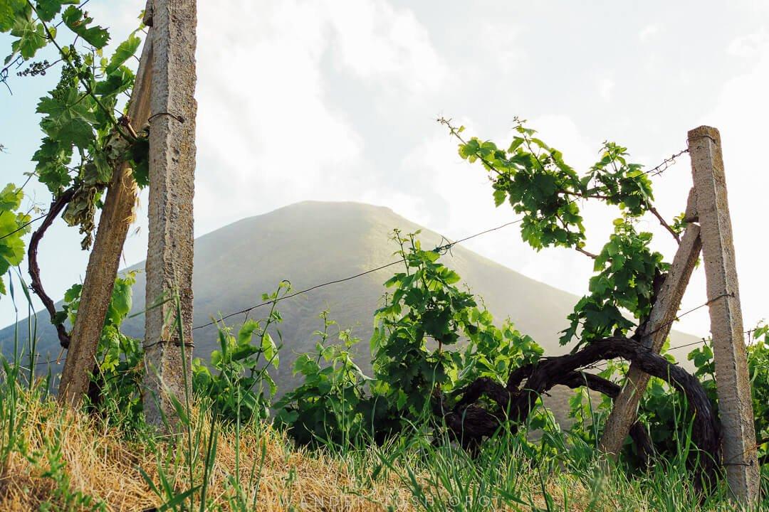 italy wineries italy winery winery in italy winery italy italian vineyards vineyard italy vineyards in italy vineyards italy vineyards of italy best italian wineries italy vineyard vineyard in italy famous italian wineries vineyard in italian italian vineyard italy vineyards best vineyards in italy best wineries in italy italian wineries italian winery wineries in italy best wine italy wine vineyards in italy famous italian vineyards