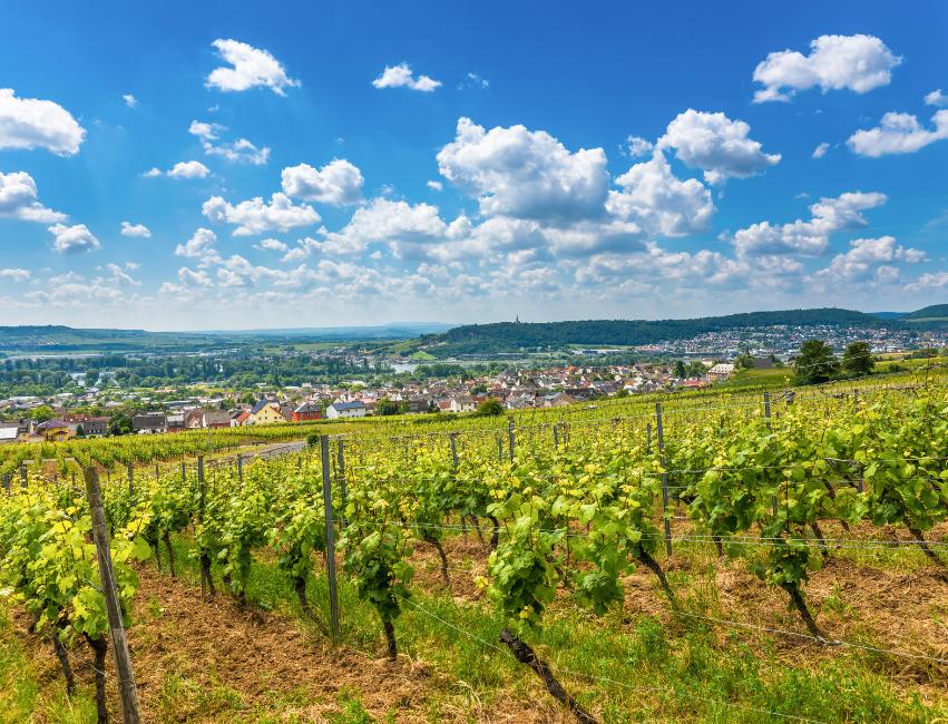German Wines and German Wine Regions