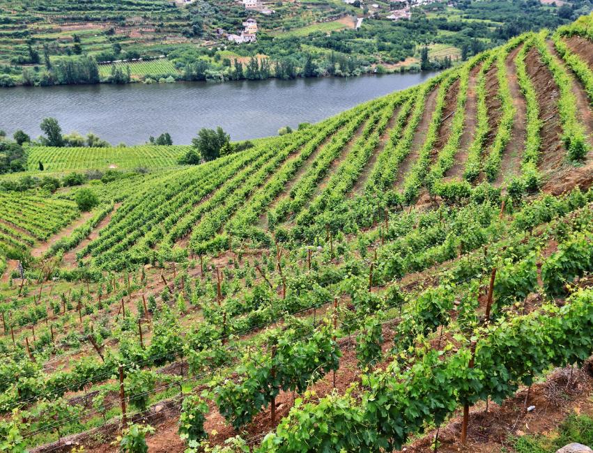 Wine regions of Portugal portugal wine region portugal wine regions wine regions portugal wine regions of portugal wine regions in portugal wine country portugal vineyard portugal vineyards in portugal region portugal portugal wine country wines portugal portuguese wines wine in portugal portugal wine portugal wines wine from portugal wine of portugal wines from portugal portuguese wine wine portugal portugal wine regions wine regions in portugal wine regions of portugal wine regions portugal wines of portugal wine vinhos portugal wine region wine portuguese wine in portuguese portugal wine map area portugal vinho branco dao wine region
